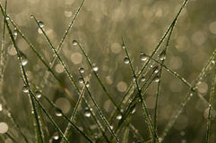 Dew in the grass Royalty Free Stock Photography