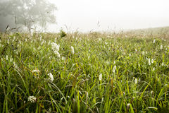 Dew on grasses in a field in Cades Cove. royalty free stock photos
