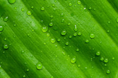 Dew on gree leaf Royalty Free Stock Photo
