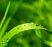 Dew on green grass. Dew on the green grass Stock Image