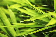 Dew on the grass. Dew on the green grass Stock Photos