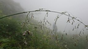 Dew on green grass, the branch is all wet in the mist. People in the distance are in the fog. View of the green field through the fog. Macro Rossa and grass stock footage
