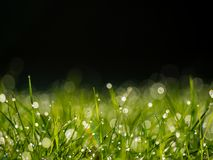 Dew on Green Grass. Close up selective focus image of dew on green grass lawn Royalty Free Stock Photo