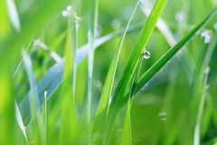 Dew on green grass Stock Image