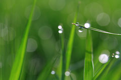 Dew on green grass Royalty Free Stock Image
