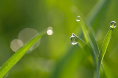 Dew on green grass Royalty Free Stock Images