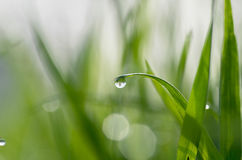 Dew on green grass Stock Photography