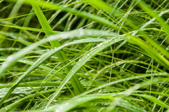 Dew on green grass Stock Images