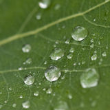 Dew on a green leaf Royalty Free Stock Image