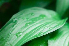 Dew on green leaf Stock Images