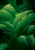 Dew on green leaves. Illustration of dew drops on green leaves with ladybird, clock or bug Stock Photo