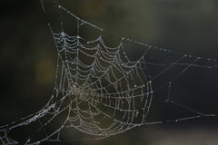 Dew laden cobweb Royalty Free Stock Photo