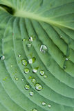 Dew on Leaf 1 Royalty Free Stock Photography