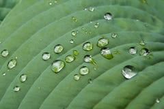 Dew on Leaf 2 Stock Images