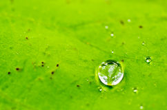 Dew on leaf Stock Photos