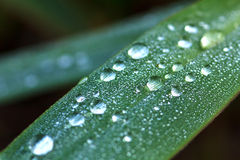Dew on leaf Stock Photos