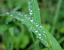 Dew on leaf. Royalty Free Stock Photos