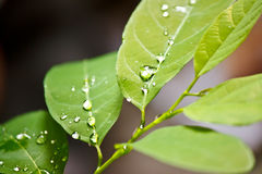 Dew on leaf Stock Photography