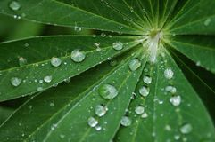 Dew in leaf. During summer morning Stock Photo