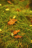 Dew on a leaf of a tree. Fallen on grass Stock Images