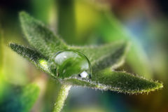 Dew on leave. On blur background Royalty Free Stock Photo