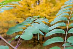 Dew on leave in autumn forest Royalty Free Stock Photography