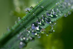 Dew on leaves Royalty Free Stock Photos
