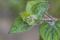 Dew leaves in early mist morning in mountainous region.  Royalty Free Stock Photos
