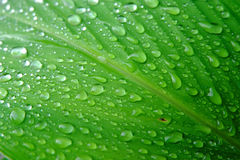 Dew on leaves Stock Photography