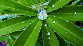 Dew on leaves. Dew on the leaves after rain royalty free stock photography