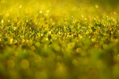Dew in the meadow Stock Image