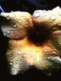Dew petal stock images
