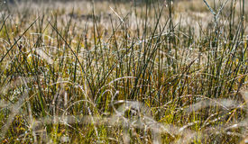 Dew and rime on grass in autumn morning Stock Photography