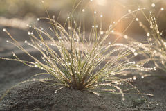 Dew on the small plant in nature Royalty Free Stock Image