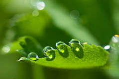 Dew and small unknown creature Stock Photo