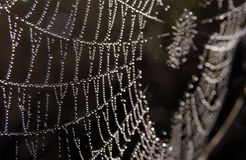 Dew on Spider Web. Morning dew glistening on a spider web, black and white royalty free stock photography