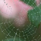 Dew on spider web Royalty Free Stock Photos