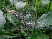 Dew on spider web stock photos