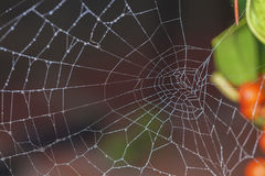 Dew on a spider web. Drops of dew on spider web close-up Royalty Free Stock Photos