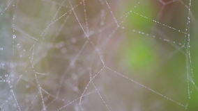 Dew on a spider web stock footage