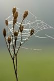 Dew on spider web enveloping plant Stock Photo
