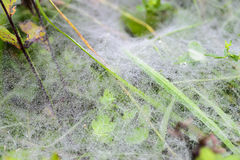 Dew spider web ground cover Royalty Free Stock Photo