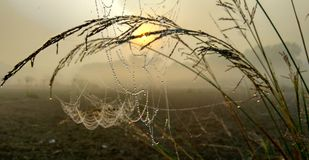 Dew on spider web in morning in winter season royalty free stock image