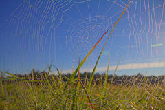 Dew on spider web Royalty Free Stock Images