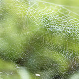 Dew on Spider web Stock Photo