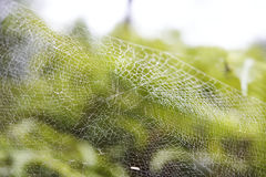 Dew on Spider web Royalty Free Stock Photography