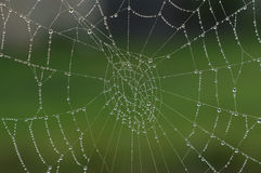 Dew on spiders web Royalty Free Stock Photo