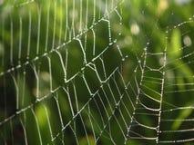 Dew and Spiderweb Stock Photo