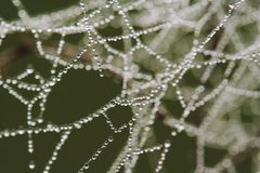 Dew on a spiderweb Stock Image
