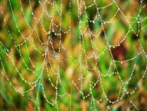 Dew on a Spiderweb Royalty Free Stock Photos